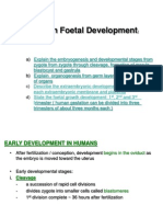 Human Foetal Development