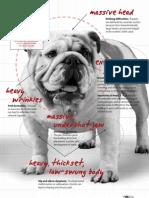 HSUS-Purebred Paradox PDF