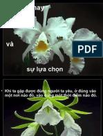 Duyen May Su Lua Chon