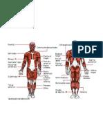 Arterias y tendones