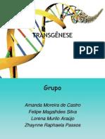 TRANSGENIA