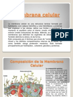 Membrana celular presentacion