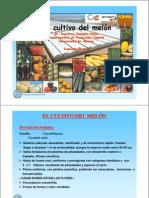 Cultivo Del Melon