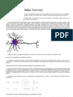 Potencial em Células Nervosas