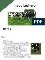 bovinos leche