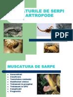 Muscaturile de Serpi, Scorpioni Insecte