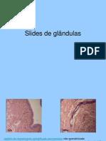 Apresentação glandulas