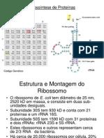 Biossintese_de_proteinas