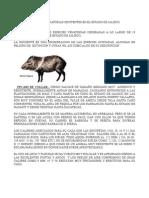 Especies Venatorias en Jalisco
