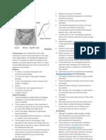 Colonoscopy Procedure