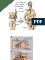 sistema endocrino[1] (1)
