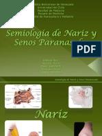 nariz-y-senos-paranasales972003-1211126197687875-9