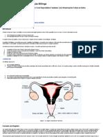 Ensinando o Método de Ovulação Billings