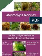 Macroalgas Marinas