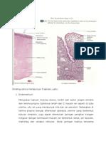 Histologi Uterus