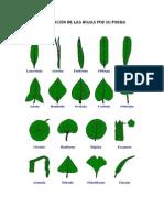 Clasificación de las hojas por su forma