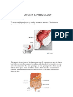 Hemorrhoids Anatomy and Physiology