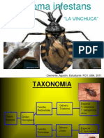 Triatoma infestans