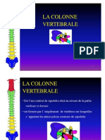 colonne vertebrale
