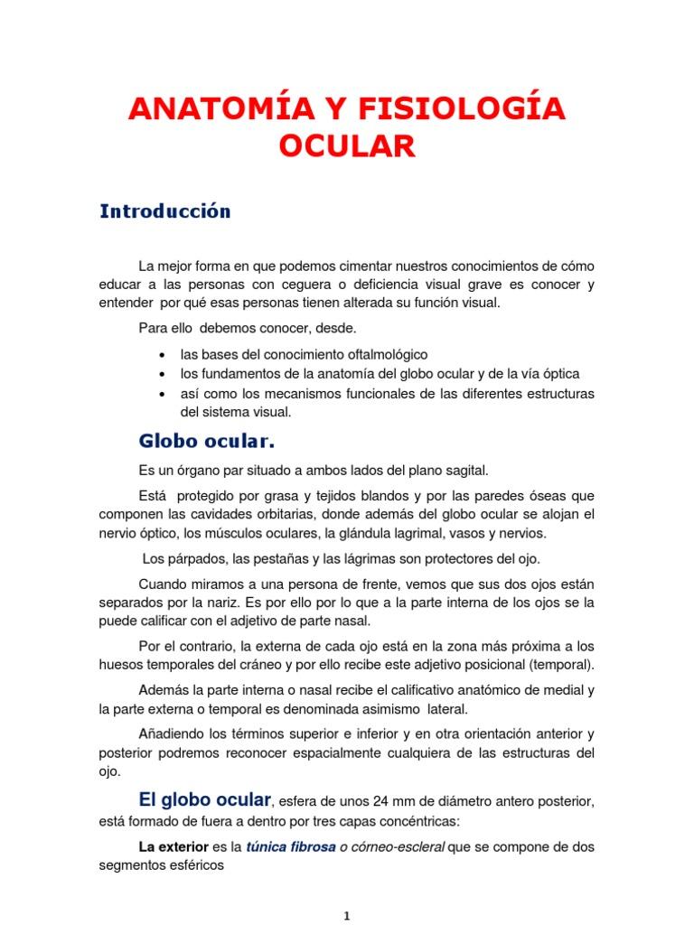 Lujoso Anatomía Y Fisiología De Los Ojos Molde - Anatomía de Las ...