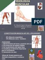 F Muscular 2