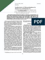BDS Selectiva de DBt Con Rcccoccud