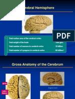 Cerebrum - Dr. Talabucon