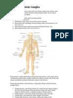 Anatomi Sistem Rangka Manusia