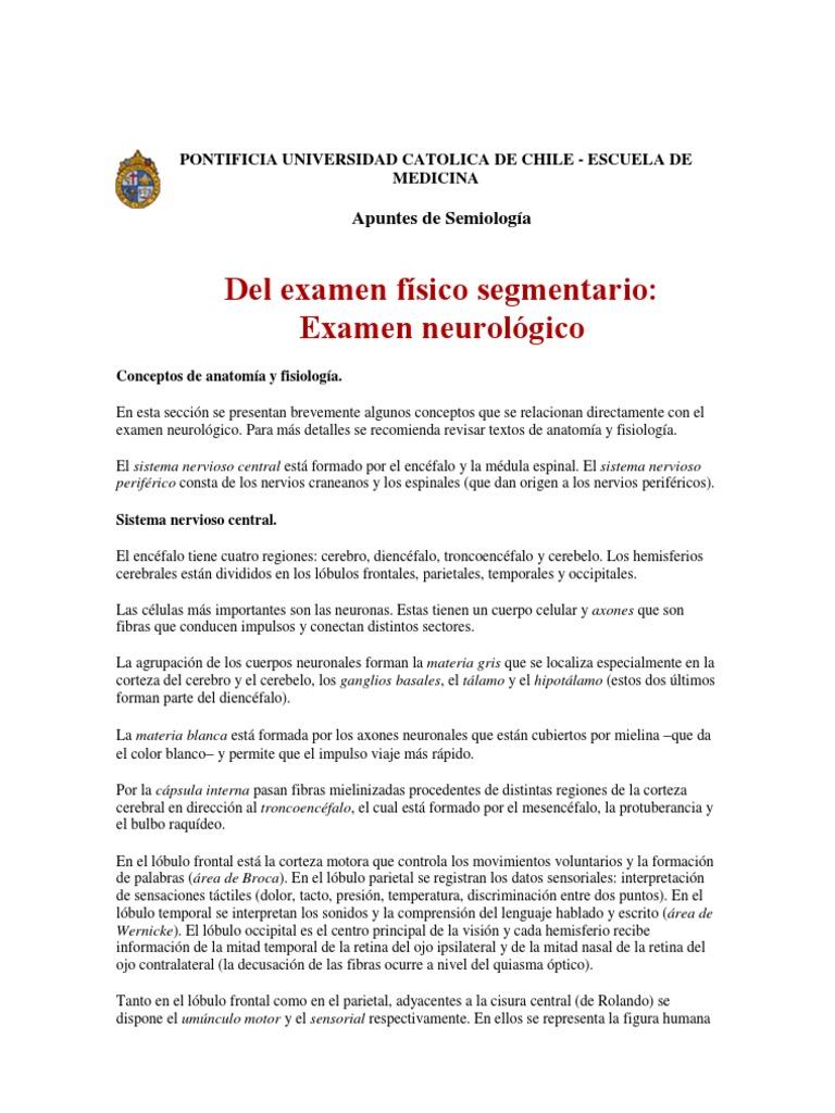 Dorable Anatomía Y Fisiología Del Sistema Nervioso Hoja De Examen ...