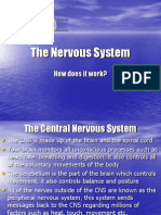 The Nervous System 9.0