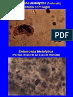 Parasitologia - Protozoarios