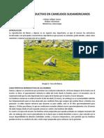 Manejo Reproductivo en Camelidos Sudamericanos