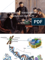 Replicacion,Transcripcion y Traduccion Del ADN [Septiembre 27 de 2011]