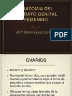 Anatomía Aparato Genital Femenino