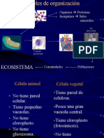 II. Celula