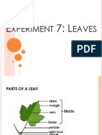 Biology - Experiment 7 - Leaves
