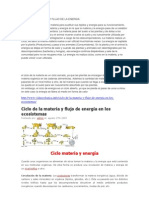 Ciclo de La Materia y Flujo de La Energia