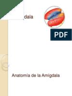 Amigdala 1