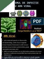ARN viral_1