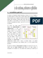 Tema 2 - GLÚCIDOS[1]