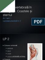 Lp2 Vertebre, Coaste, Stern