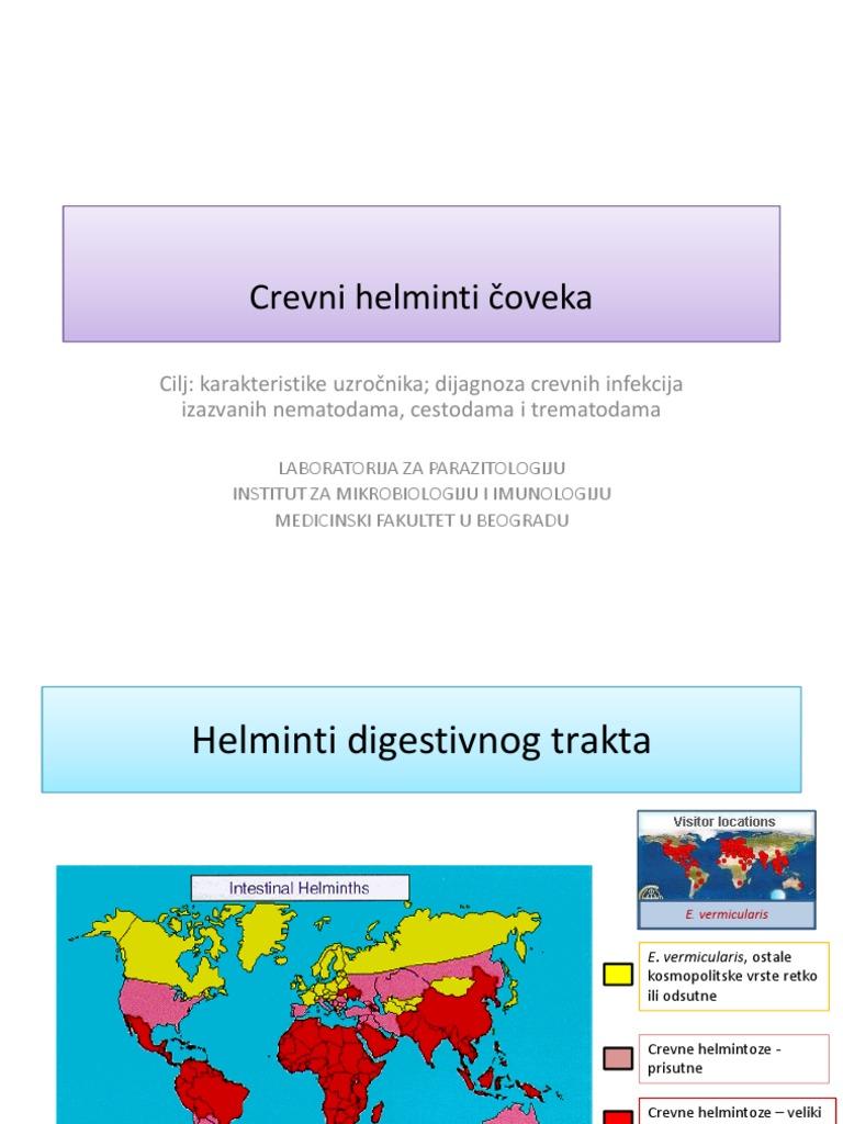 Enterobius vermicularis dijagnoza. Enterobius vermicularis papillomavirus sur la luette