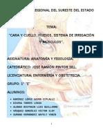 Anatomia en Equipo