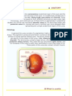 Uveitis Research