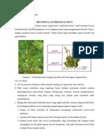BEDA Bryophyta + Pteridophyta