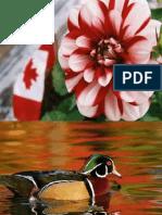 CanadaMaravilhoso1