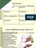 contraccionmuscular-