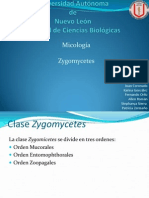 CLASE de MICO Zygomicetes