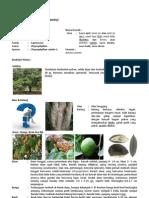 Kea Chrysophyllum Cainito (Kenitu)