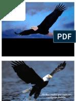 Un Aguila llamada Libertad ...!